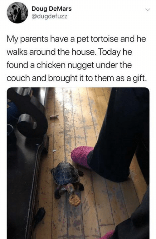 Doug: Doug DeMars  @dugdefuzz  My parents have a pet tortoise and he  walks around the house. Today he  found a chicken nugget under the  couch and brought it to them as a gift.