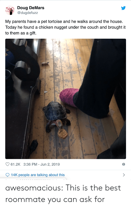 Doug: Doug DeMars  @dugdefuzz  My parents have a pet tortoise and he walks around the house.  Today he found a chicken nugget under the couch and brought it  to them as a gift.  61.2K 3:36 PM Jun 2, 2019  14K people are talking about this awesomacious:  This is the best roommate you can ask for