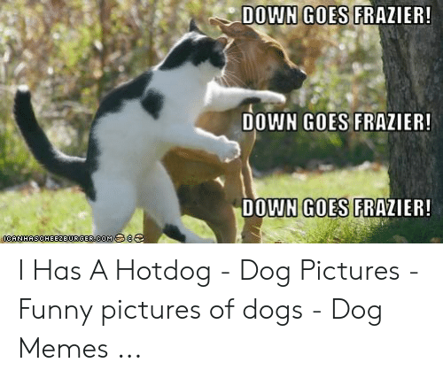 Down Goes Frazier: DOWN GOES FRAZIER!  DOWN GOES FRAZIER!  DOWN GOES FRAZIER!  0CANHASCHEE2BURGERCOM 8 I Has A Hotdog - Dog Pictures - Funny pictures of dogs - Dog Memes ...