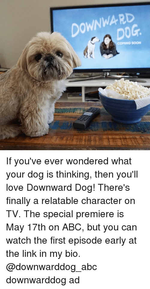 the specials: DOWNWARD If you've ever wondered what your dog is thinking, then you'll love Downward Dog! There's finally a relatable character on TV. The special premiere is May 17th on ABC, but you can watch the first episode early at the link in my bio. @downwarddog_abc downwarddog ad