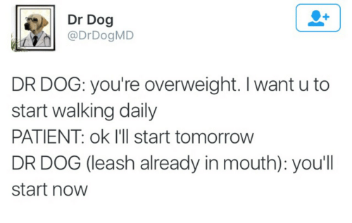 dr dog: Dr Dog  DrDogMD  DR DOG: you're overweight. I want u to  start walking daily  PATIENT: ok I'll start tomorrow  DR DOG (leash already in mouth): you'll  start noW