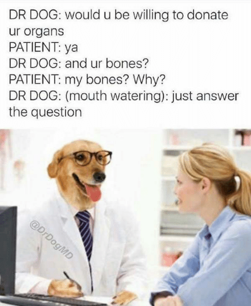 dr dog: DR DOG: would u be willing to donate  ur organs  PATIENT: ya  DR DOG: and ur bones?  PATIENT: my bones? Why?  DR DOG: (mouth watering): just answer  the question  @DrDogMD
