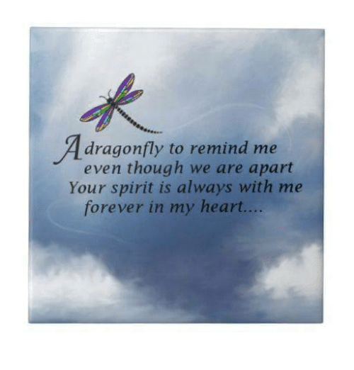 Dragonfly to Remind Me Even Though We Are Apart Your
