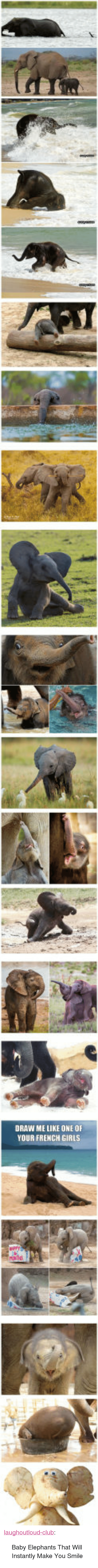 """Baby Elephants: DRAW ME LIKE ONE OF  YOUR FRENCH GIRLS <p><a href=""""http://laughoutloud-club.tumblr.com/post/160437599742/baby-elephants-that-will-instantly-make-you-smile"""" class=""""tumblr_blog"""">laughoutloud-club</a>:</p>  <blockquote><p>Baby Elephants That Will Instantly Make You Smile</p></blockquote>"""