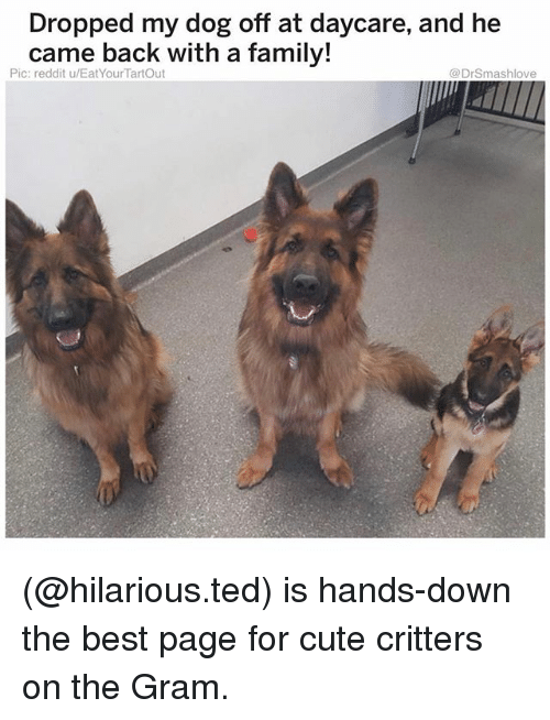 Cute, Family, and Memes: Dropped my dog off at daycare, and he  came back with a family!  Pic: reddit u/EatYourTartOut  @DrSmashlove (@hilarious.ted) is hands-down the best page for cute critters on the Gram.