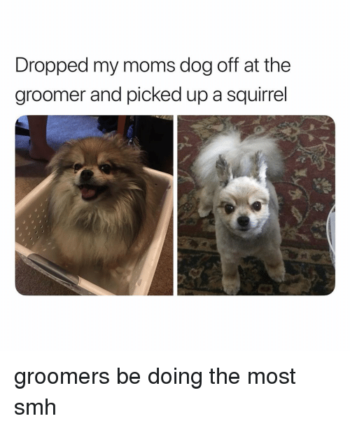 Groomers: Dropped my moms dog off at the  groomer and picked up a squirrel  ed groomers be doing the most smh