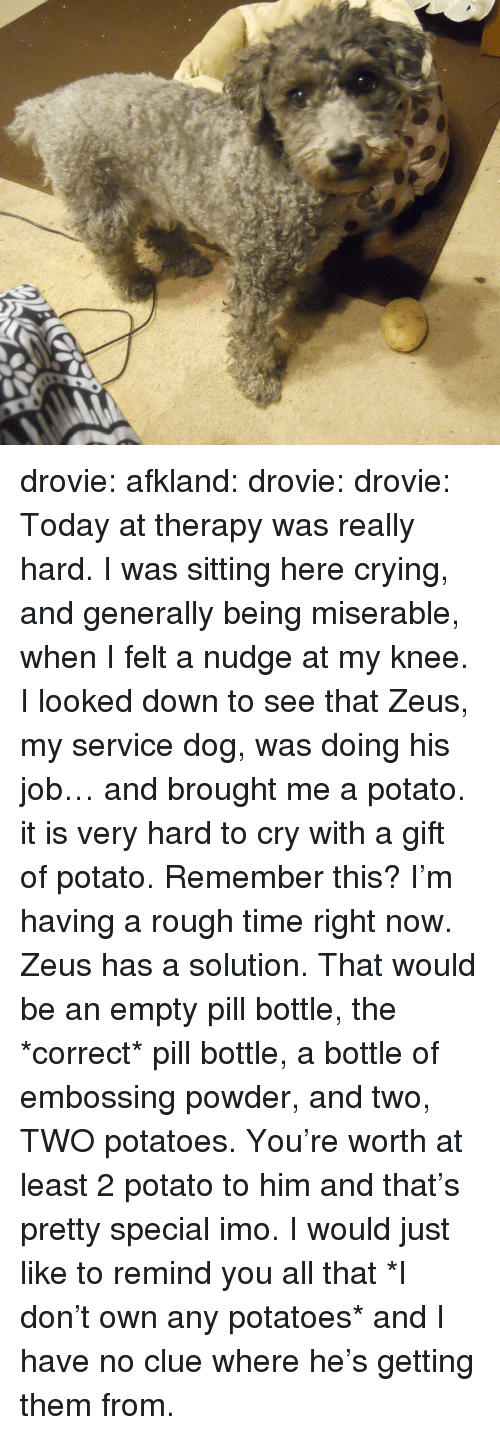 Nudge: drovie: afkland:  drovie:  drovie:  Today at therapy was really hard. I was sitting here crying, and generally being miserable, when I felt a nudge at my knee. I looked down to see that Zeus, my service dog, was doing his job… and brought me a potato. it is very hard to cry with a gift of potato.   Remember this? I'm having a rough time right now. Zeus has a solution.  That would be an empty pill bottle, the *correct* pill bottle, a bottle of embossing powder, and two, TWO potatoes.   You're worth at least 2 potato to him and that's pretty special imo.   I would just like to remind you all that *I don't own any potatoes* and I have no clue where he's getting them from.