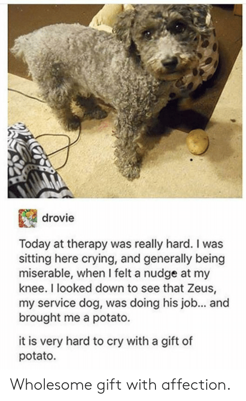 Sitting Here: drovie  Today at therapy was really hard. I was  sitting here crying, and generally being  miserable, when I felt a nudge at my  knee. I looked down to see that Zeus,  my service dog, was doing his job... an  brought me a potato.  it is very hard to cry with a gift of  potato. Wholesome gift with affection.
