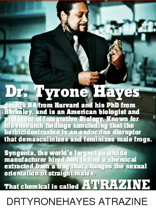 syngenta: Drr Tyrone Haves  DiC  s BA from Harvard and his PhD from  Berkeley, and is an American biologist and  or of Integrative Biology, Known for  his research findings concluding that the  herbicideatrazine is an endocrine disruptor  that demasculinizes andfeminizes male frogs.  Syngenta, the world's largest pesticide  manufacturer hired him to find a chemical  extracted from a  orientation of straight males  frog that changes the sexual  That chemical is called ATRAZINE DRTYRONEHAYES ATRAZINE