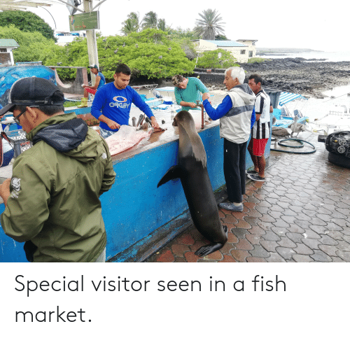 Oakey: drtc Mer tr  atn  Env n e  D h or feed  fe datace of2 neters  Thy  lai shee d  Incre  OAKEY  RMG-03-081-10  THE  NORT  FACH  3ye Nomal  CAMNIGOS  ado Special visitor seen in a fish market.