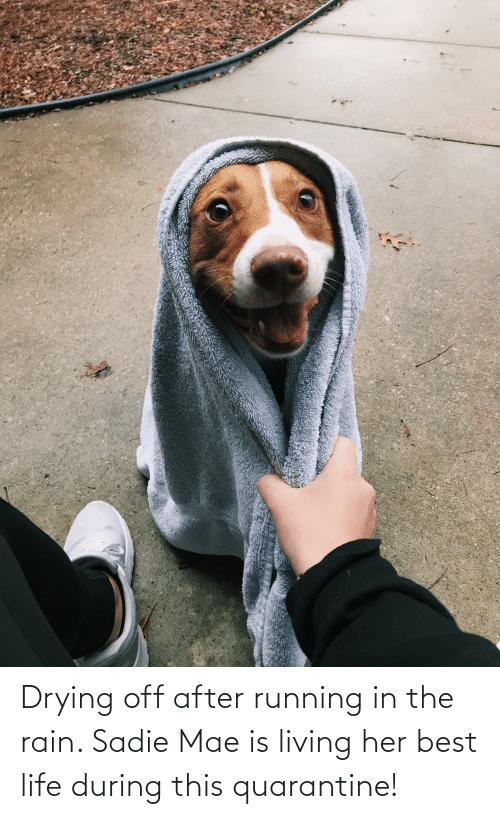 Running In The: Drying off after running in the rain. Sadie Mae is living her best life during this quarantine!