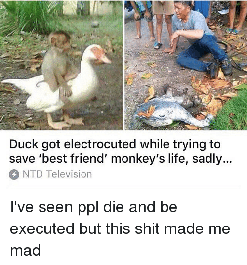 Best Friend, Life, and Memes: Duck got electrocuted while trying to  save 'best friend' monkey's life, sadly...  NTD Television I've seen ppl die and be executed but this shit made me mad