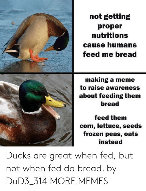 fed: Ducks are great when fed, but not when fed da bread. by DuD3_314 MORE MEMES
