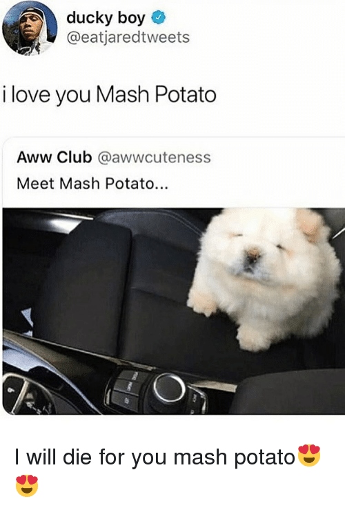 Aww, Club, and Funny: ducky boy  @eatjaredtweets  i love you Mash Potato  Aww Club @awwcuteness  Meet Mash Potato... I will die for you mash potato😍😍