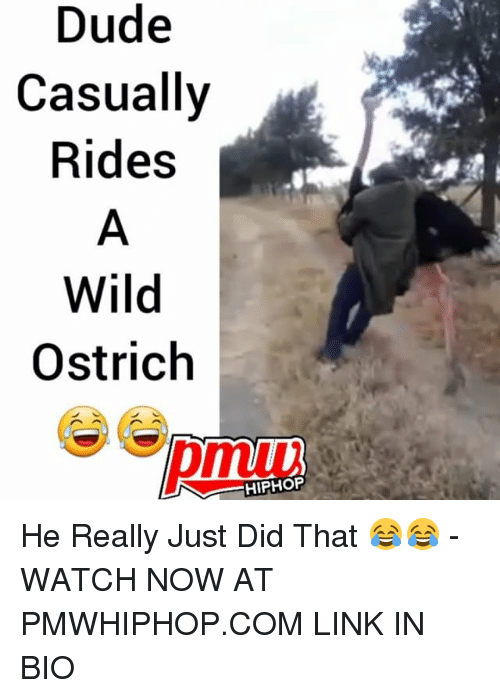 Dude, Memes, and Link: Dude  Casually  Rides  Wild  Ostrich  HIPHOP He Really Just Did That 😂😂 - WATCH NOW AT PMWHIPHOP.COM LINK IN BIO