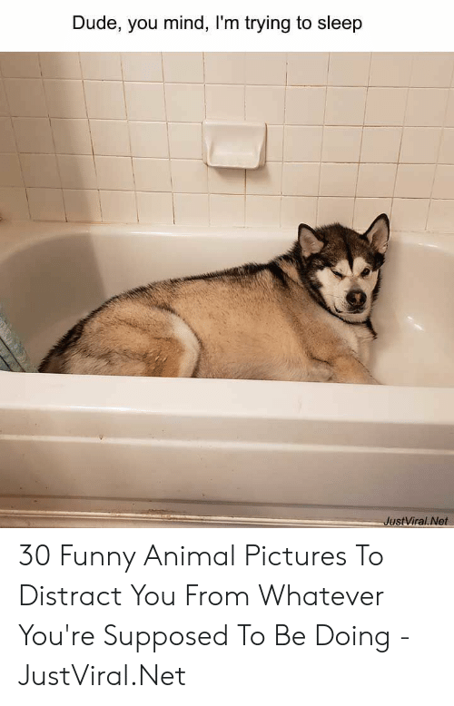 distract: Dude, you mind, I'm trying to sleep  JustViral.Net 30 Funny Animal Pictures To Distract You From Whatever You're Supposed To Be Doing - JustViral.Net