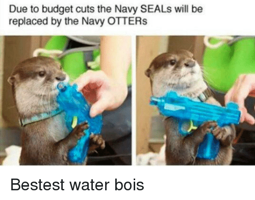 Otters: Due to budget cuts the Navy SEALs will be  replaced by the Navy OTTERs <p>Bestest water bois</p>