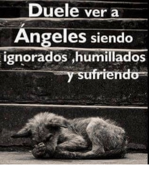 Friendo: Duele ver a  Angeles siendo  ignorados ,humillados  friendo