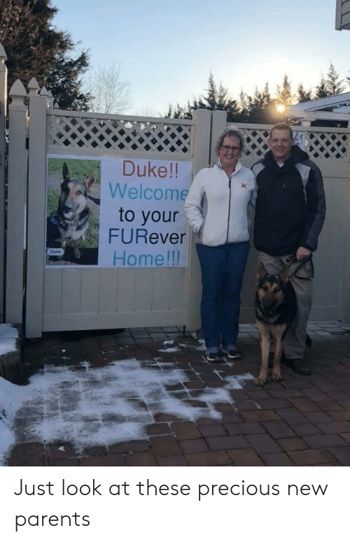 New Parents: Duke!!  Welcome  to your  FURever  Home lll  Duke Just look at these precious new parents