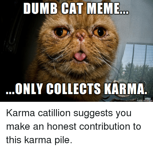 Cats, Dumb, and Funny: DUMB CAT MEME  ONLY COLLECTS KARMA  made on ingur Karma catillion suggests you make an honest contribution to this karma pile.