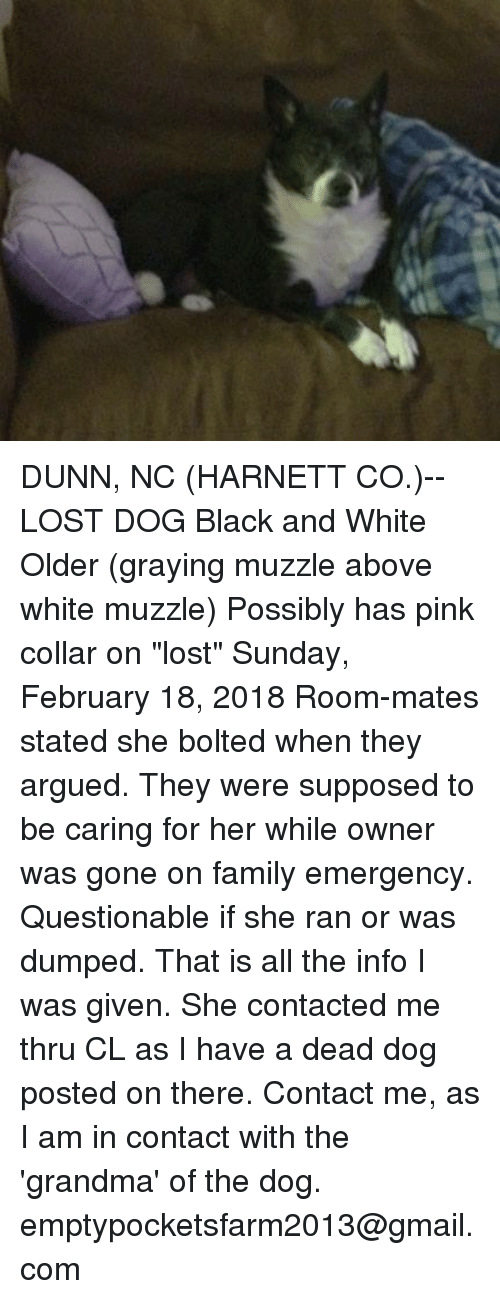 """Family, Grandma, and Memes: DUNN, NC (HARNETT CO.)-- LOST DOG  Black and White Older (graying muzzle above white muzzle) Possibly has pink collar on """"lost"""" Sunday, February 18, 2018  Room-mates stated she bolted when they argued. They were supposed to be caring for her while owner was gone on family emergency. Questionable if she ran or was dumped.  That is all the info I was given. She contacted me thru CL as I have a dead dog posted on there.  Contact me, as I am in contact with the 'grandma' of the dog. emptypocketsfarm2013@gmail.com"""