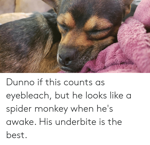 spider monkey: Dunno if this counts as eyebleach, but he looks like a spider monkey when he's awake. His underbite is the best.