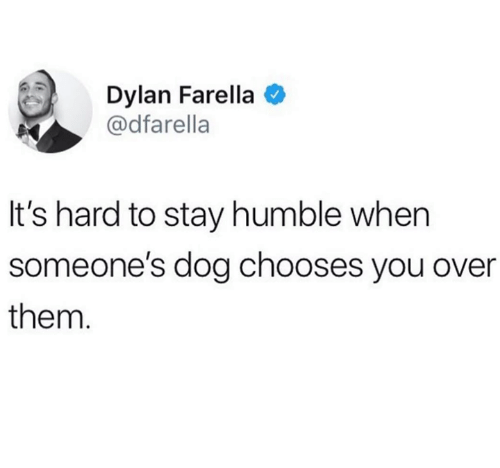 Stay Humble: Dylan Farella  @dfarella  It's hard to stay humble when  someone's dog chooses you over  them