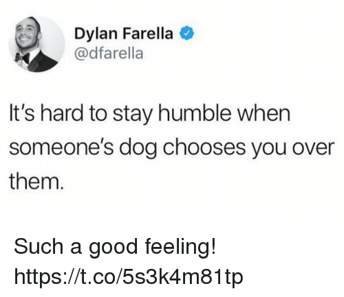Funny, Good, and Humble: Dylan Farella  @dfarella  It's hard to stay humble when  someone's dog chooses you over  them Such a good feeling! https://t.co/5s3k4m81tp