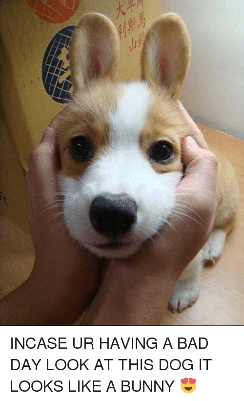 Look At This Dog: E-鸷 INCASE UR HAVING A BAD DAY LOOK AT THIS DOG IT LOOKS LIKE A BUNNY 😍