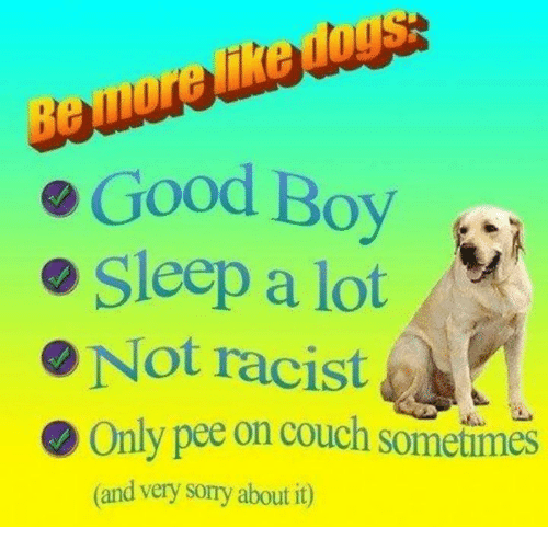 Sorry, Couch, and Good: e Good Boy  Sleep a lot  Not racist  Only pee on couch sometimes  (and very sorry about it)
