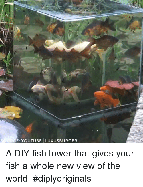 youtubed: E: YOUTUBE LUXUSBURGER A DIY fish tower that gives your fish a whole new view of the world. #diplyoriginals