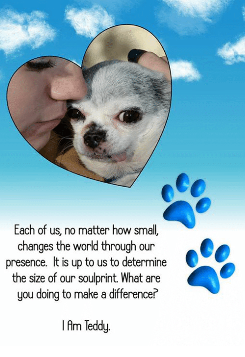 Memes, 🤖, and How: Each of us, no matter how small  changes the world through our  presence. It is up to us to determine  the size of our soulprint. What are  you doing to make a difference?  I Am Teddy.