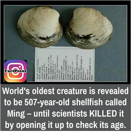 Aaay: EactPoint  world's oldest creature is revealed  to be 507-year-old shellfish called  Ming-until scientists KILLED it  by opening it up to check its age.  eeig  ea  ca E  Es  Lt  SI  IS fi KC  si  gz or audAM, JAM-reau  Is  araeN  worsonofa  useleurous? awareen !  ↓ unseasouad  uhSC  ts ti  edn  wasze audreH  nt  wu-6 99 46ua7  JO waAn  rl  coip  aged woooooo  sole pune  uossourousegura, aero-  osrooS JOp0-00  trs  E 두 £8 4adop AaeM  sa  MSLLL apnaduo7aay  ee il  Nesea99 apnaae7aay  a MOLAEpua  eynn  dytg  COOY SOG uages  puerot Aaneoo7  pgZi90 aaay  07ui  rover essay snuao  I  S5  ld egp  rl b i  no