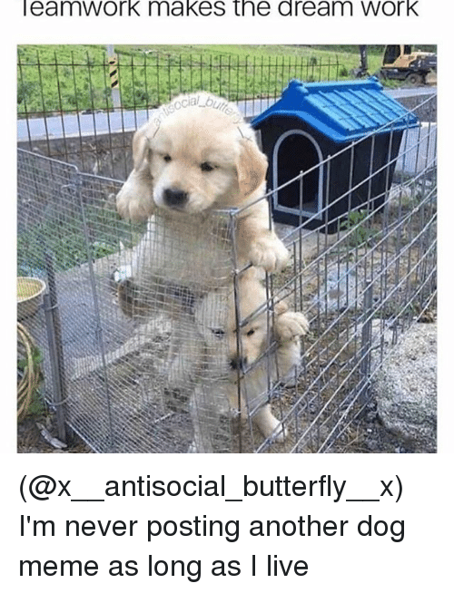 Dream Work: eamWork makes the dream Work (@x__antisocial_butterfly__x) I'm never posting another dog meme as long as I live