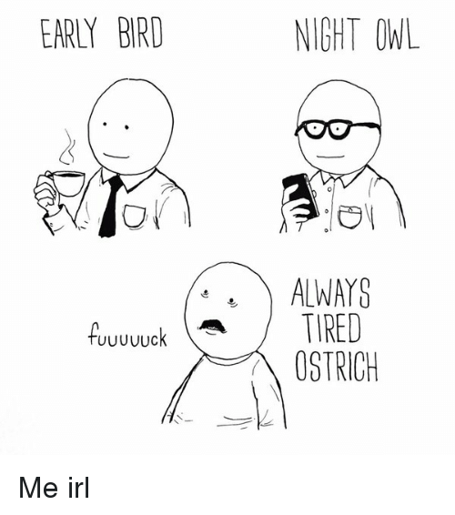 an early bird and a night owl essay