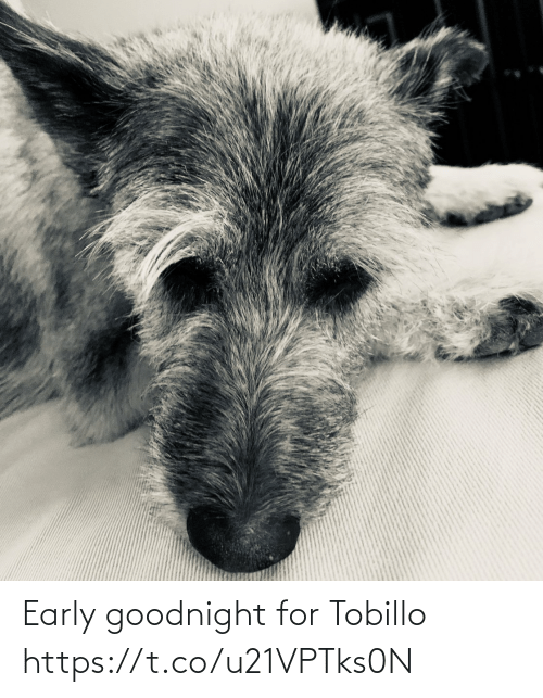 goodnight: Early goodnight for Tobillo https://t.co/u21VPTks0N