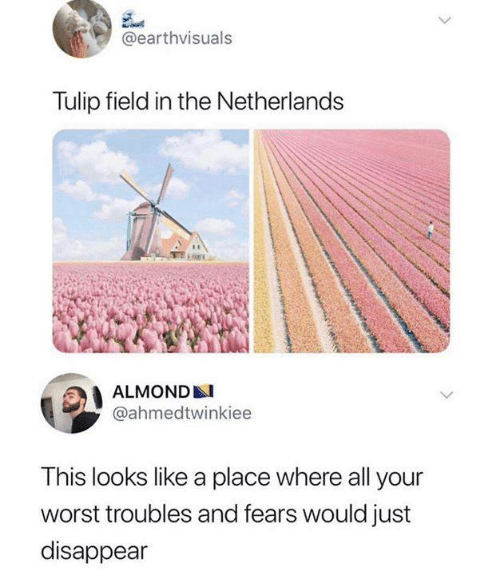 Netherlands: @earthvisuals  Tulip field in the Netherlands  ALMOND  @ahmedtwinkiee  This looks like a place where all your  worst troubles and fears would just  disappear