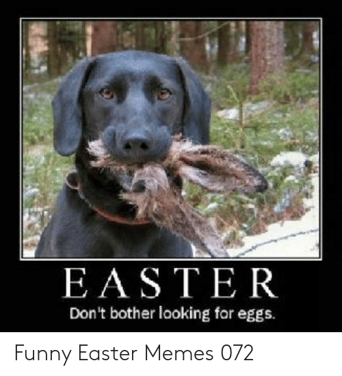 funny easter: EASTER  Don't bother looking for eggs. Funny Easter Memes 072