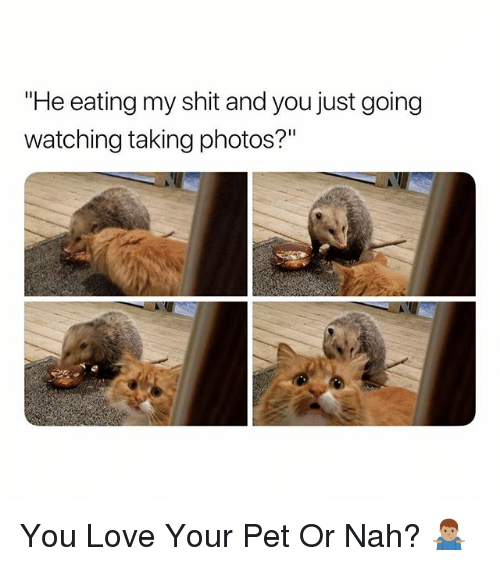 "Love, Shit, and Dank Memes: eating my shit and you just going  watching taking photos?"" You Love Your Pet Or Nah? 🤷🏽‍♂️"