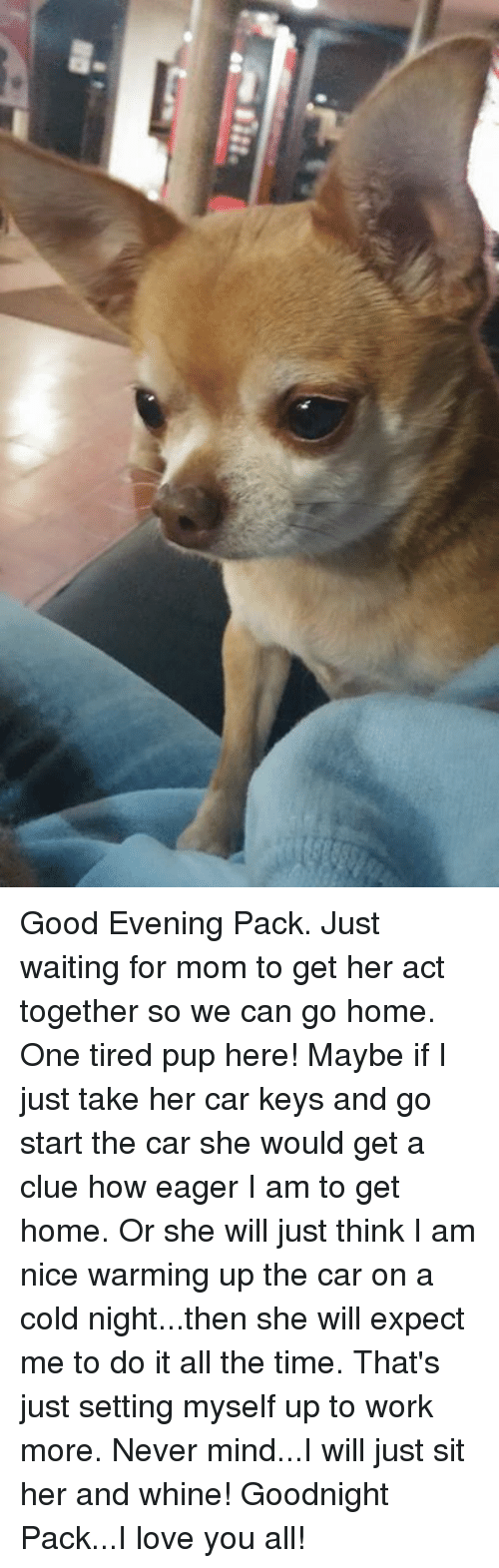 Memes, Pup, and All the Time: Eau. Good Evening Pack. Just waiting for mom to get her act together so we can go home. One tired pup here! Maybe if I just take her car keys and go start the car she would get a clue how eager I am to get home. Or she will just think I am nice warming up the car on a cold night...then she will expect me to do it all the time. That's just setting myself up to work more. Never mind...I will just sit her and whine!  Goodnight Pack...I love you all!