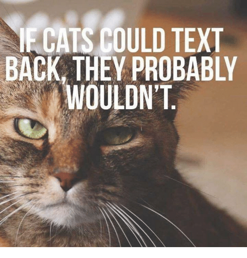 Text Back: ECATS COULD TEXT  BACK, THEY PROBABLY  WOULDN'T