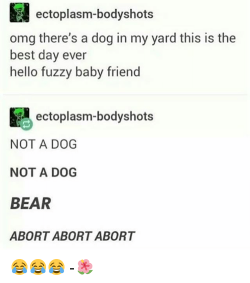 Hello, Memes, and Omg: ectoplasm-bodyshots  omg there's a dog in my yard this is the  best day ever  hello fuzzy baby friend  ectoplasm-bodyshots  NOT A DOG  NOT A DOG  BEAR  ABORT ABORT ABORT 😂😂😂 -🌺