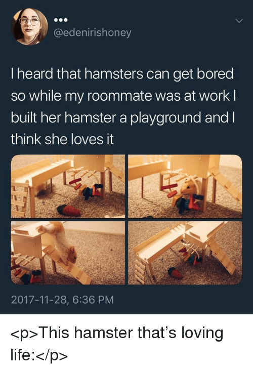 Loving Life: @edenirishoney  I heard that hamsters can get bored  so while my roommate was at work l  built her hamster a playground and l  think she loves it  2017-11-28, 6:36 PM <p>This hamster that's loving life:</p>