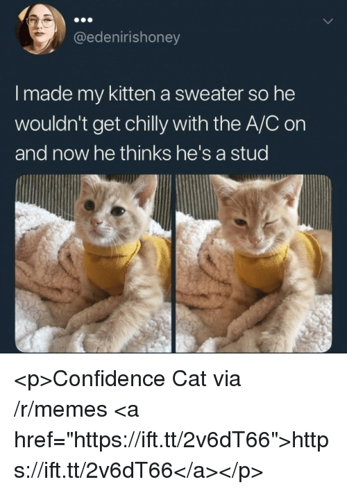 "Confidence, Memes, and Cat: @edenirishoney  I made my kitten a sweater so he  wouldn't get chilly with the A/C on  and now he thinks he's a stud <p>Confidence Cat via /r/memes <a href=""https://ift.tt/2v6dT66"">https://ift.tt/2v6dT66</a></p>"