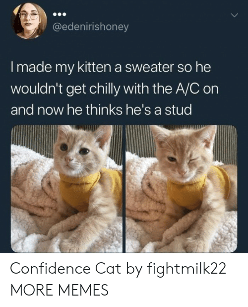 stud: @edenirishoney  I made my kitten a sweater so he  wouldn't get chilly with the A/C on  and now he thinks he's a stud Confidence Cat by fightmilk22 MORE MEMES
