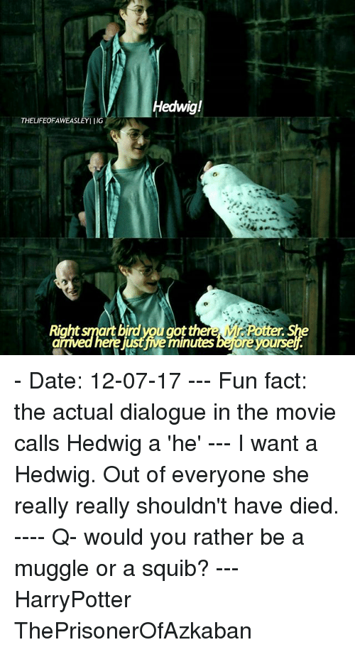 Memes, Would You Rather, and Date: edwig!  THELIFEOFAWEASLEYIIG  Right smart birdyou got th  ere just ive minutes bejore yoursel - Date: 12-07-17 --- Fun fact: the actual dialogue in the movie calls Hedwig a 'he' --- I want a Hedwig. Out of everyone she really really shouldn't have died. ---- Q- would you rather be a muggle or a squib? --- HarryPotter ThePrisonerOfAzkaban
