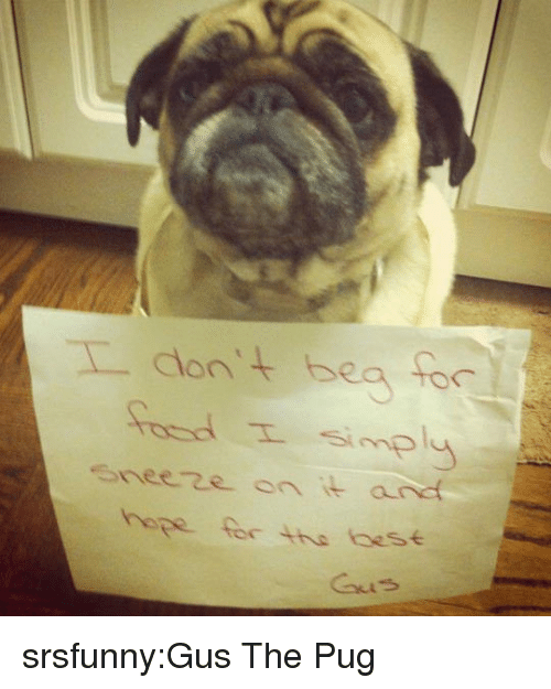 gus: eeze on it and  hope for the aese srsfunny:Gus The Pug
