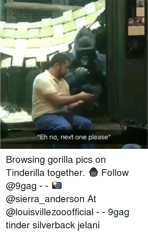 """9gag, Memes, and Tinder: """"Eh no, next one please"""" Browsing gorilla pics on Tinderilla together. 🦍 Follow @9gag - - 📸 @sierra_anderson At @louisvillezooofficial - - 9gag tinder silverback jelani"""