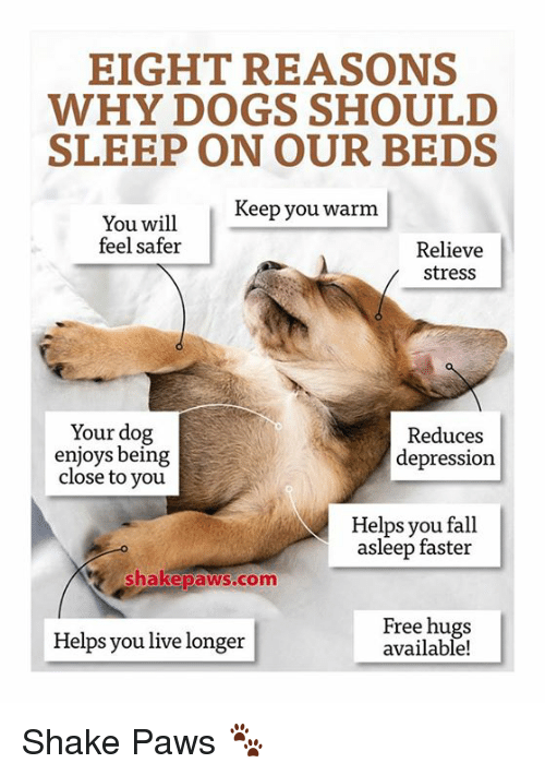 Should Your Dog Sleep On Your Bed