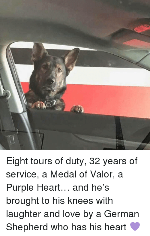 Love, Memes, and German Shepherd: Eight tours of duty, 32 years of service, a Medal of Valor, a Purple Heart… and he's brought to his knees with laughter and love by a German Shepherd who has his heart  💜